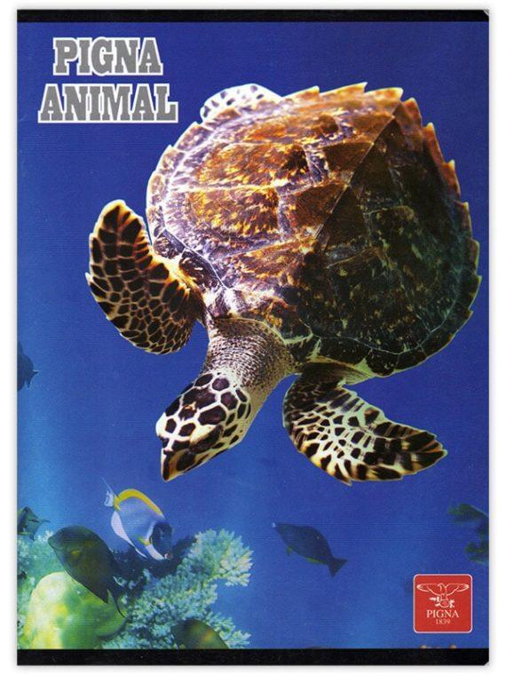 pc2_a5-dictando-80-file_-animal-turtle665